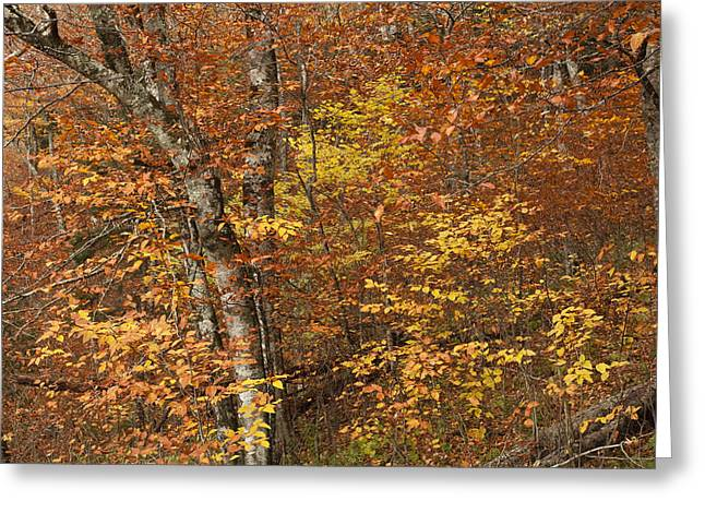 Autumn Art Greeting Cards - Autumn in the Woods Greeting Card by Andrew Soundarajan