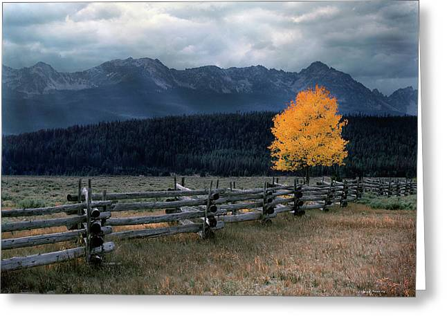 Old Fence Greeting Cards - Autumn Light Greeting Card by Leland D Howard