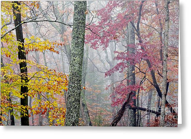 Monongahela National Forest Greeting Cards - Autumn Monongahela National Forest Greeting Card by Thomas R Fletcher