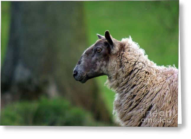 Sheep Greeting Cards - Baa Baa Greeting Card by Angel  Tarantella