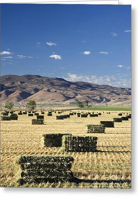 Hay Bales Greeting Cards - Baled Grass Greeting Card by Inga Spence