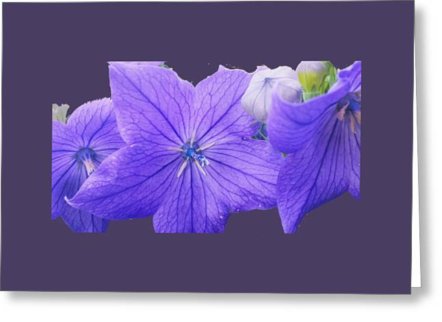 Balloon Flowers  Greeting Card by Jennifer Kohler