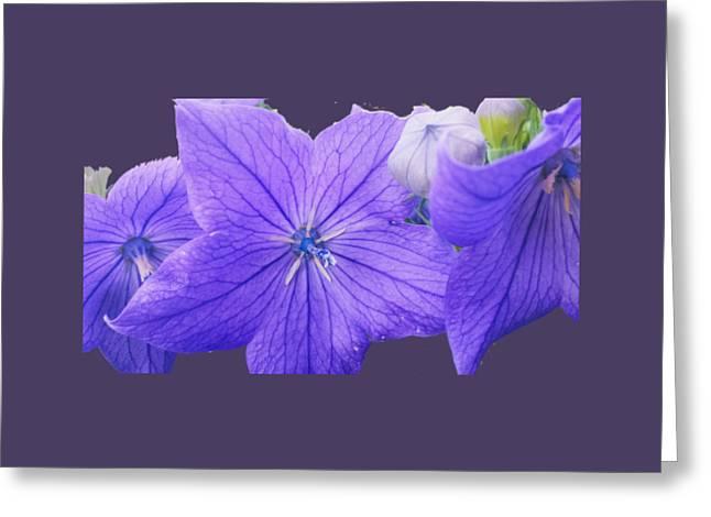 Balloon Flower Digital Greeting Cards - Balloon Flowers  Greeting Card by Jennifer Kohler