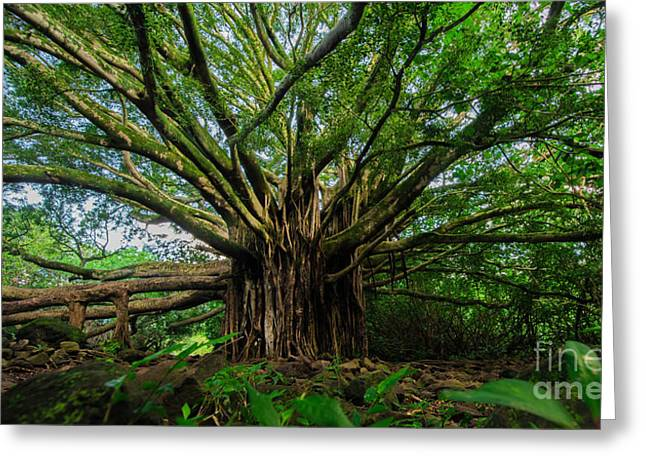 Photo Art Gallery Greeting Cards - Banyon Tree    Greeting Card by Joy McAdams