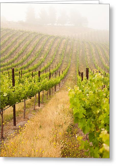 Viticulture Greeting Cards - Beautiful Lush Grape Vineyard Greeting Card by Andy Dean