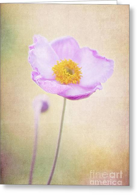 Flower Blooms Mixed Media Greeting Cards - Beauty Greeting Card by Angela Doelling AD DESIGN Photo and PhotoArt