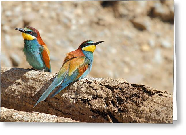 Freed Tapestries - Textiles Greeting Cards - Bee-eater Greeting Card by Marco Amenta
