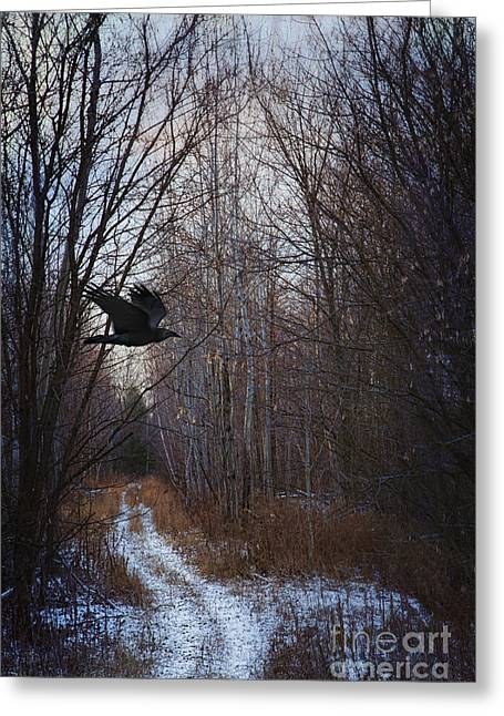 Tail Feather Greeting Cards - Black bird flying by in forest Greeting Card by Sandra Cunningham
