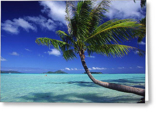 Overhang Photographs Greeting Cards - Bora Bora, Palm Tree Greeting Card by Ron Dahlquist - Printscapes