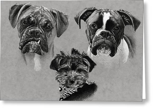 Conte Pencil Drawings Greeting Cards - 2 Boxers 1 Yorkie Greeting Card by Myke  Irving