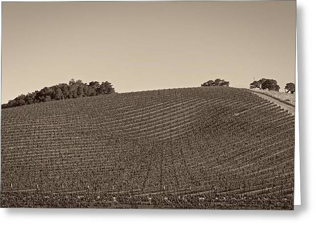 California Vineyard Greeting Cards - California Hillside Vineyard Greeting Card by Mountain Dreams