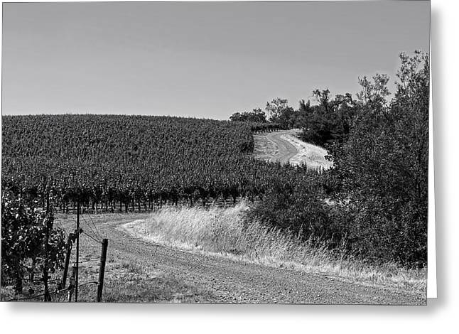 Gravel Road Greeting Cards - California Vineyard Trail Greeting Card by Mountain Dreams