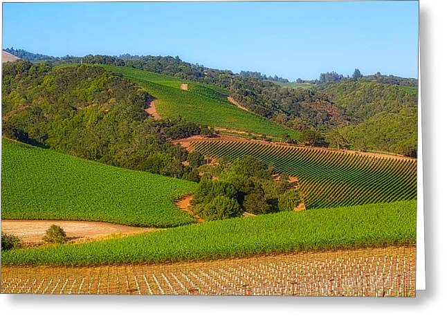 California Vineyard Greeting Cards - California Vineyards  Greeting Card by Mountain Dreams