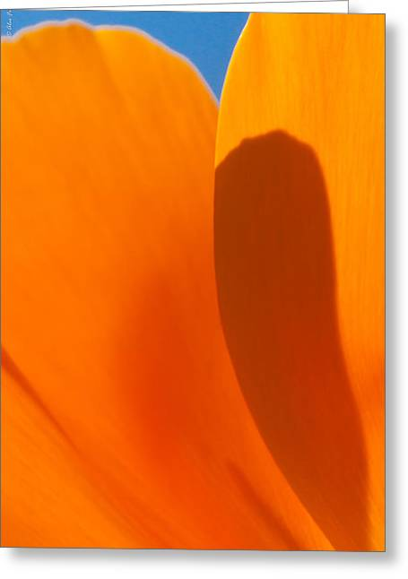 Vichy Greeting Cards - Californian Poppies Greeting Card by Alexander Fedin