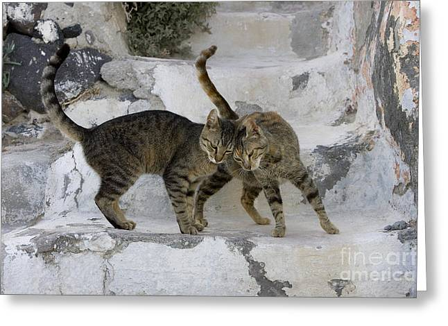 Gray Hair Greeting Cards - Cat And Her Kitten Greeting Card by Jean-Louis Klein & Marie-Luce Hubert
