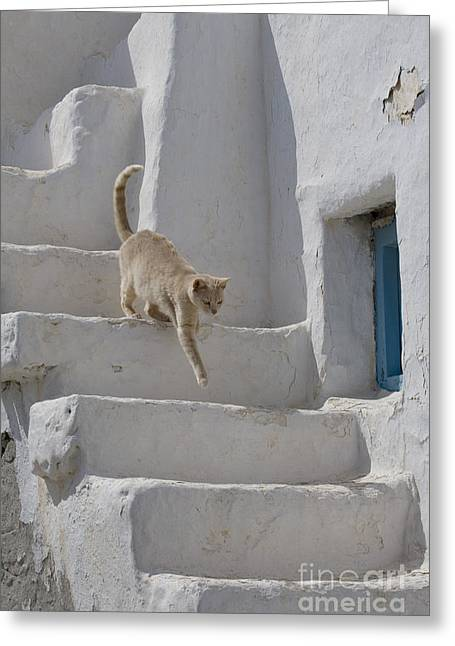 Dilute Greeting Cards - Cat On The Stairs, Greece Greeting Card by Jean-Louis Klein & Marie-Luce Hubert