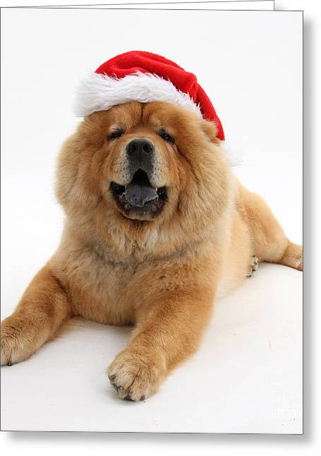 Christmas Dog Greeting Card by Mark Taylor