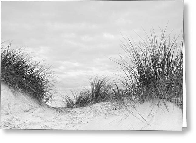 Wood Post Greeting Cards - Close up detail of marram grass on sand dune in black and white Greeting Card by Matthew Gibson