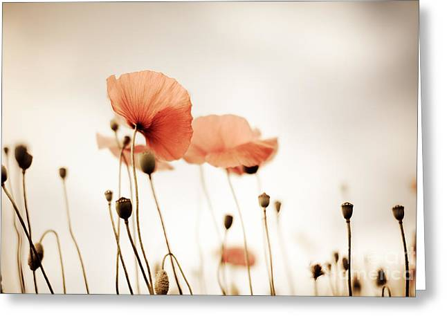 Field. Cloud Greeting Cards - Corn Poppy Flowers Greeting Card by Nailia Schwarz