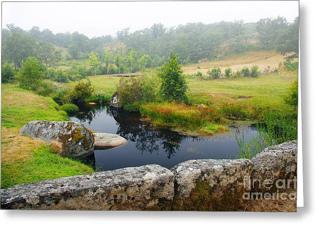 Wet Grass Greeting Cards - Creek Greeting Card by Carlos Caetano