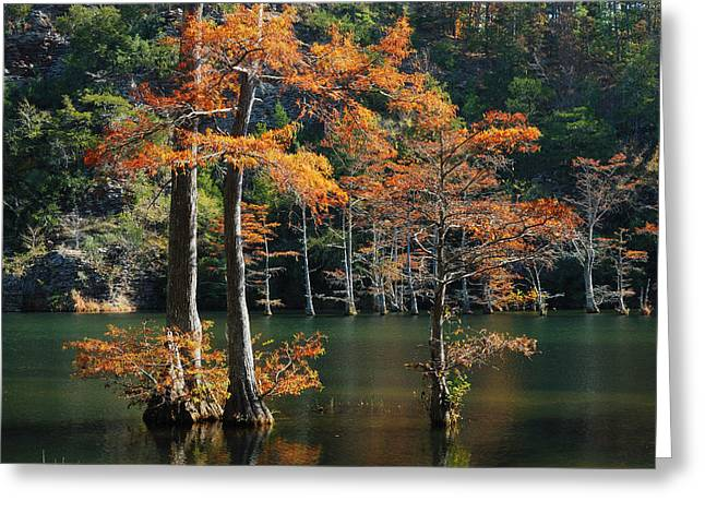 Fort River Greeting Cards - Cypress Trees in Fort River Greeting Card by Iris Greenwell