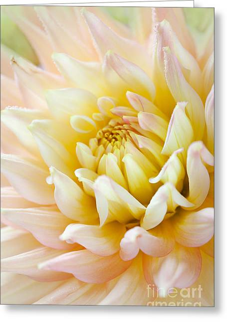 Drop Greeting Cards - Dahlia Greeting Card by Nailia Schwarz