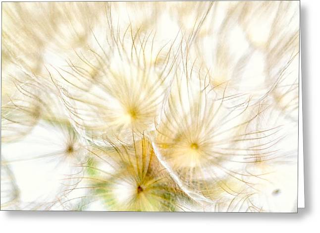 """soft Focus"" Greeting Cards - Dandelion Greeting Card by Stylianos Kleanthous"