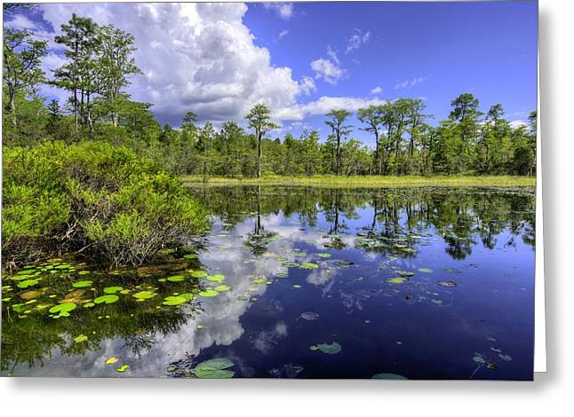 Reflection In Water Greeting Cards - Deep in the Woods Greeting Card by JC Findley