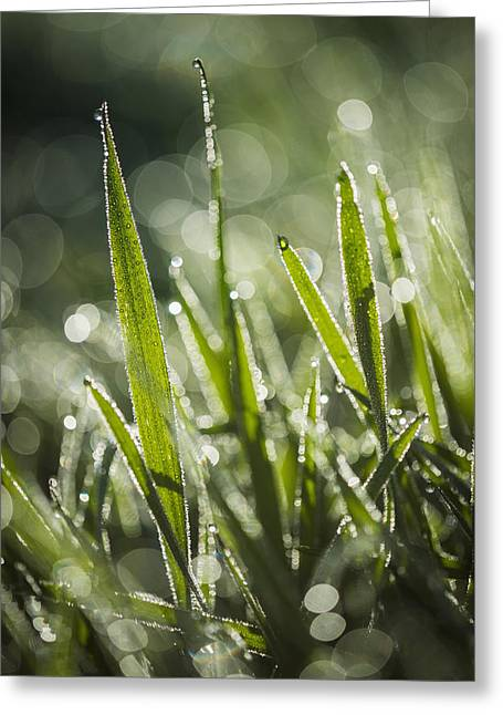 Wet Grass Greeting Cards - Dew Glistens On The Grass  Astoria Greeting Card by Robert L. Potts