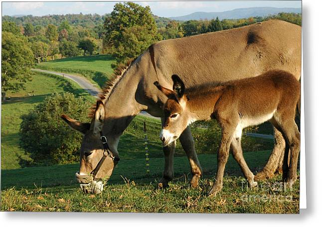 Equidae Greeting Cards - Donkey with Foal Greeting Card by Thomas R Fletcher