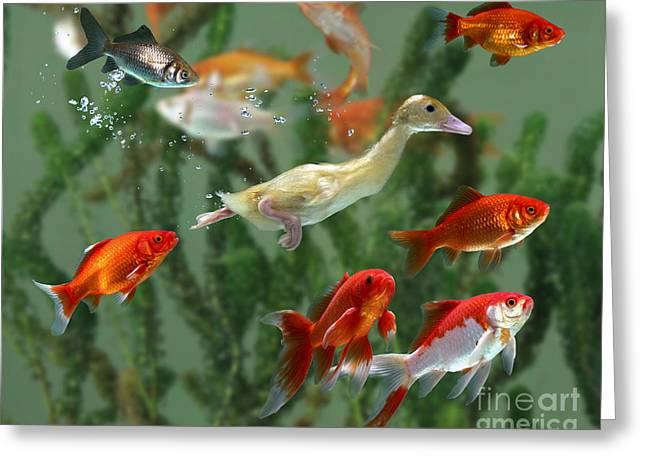 Aquarium Fish Greeting Cards - Duckling And Goldfish Greeting Card by Jane Burton