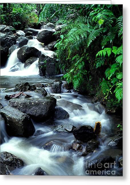 Yunque Greeting Cards - El Yunque Waterfall Greeting Card by Thomas R Fletcher