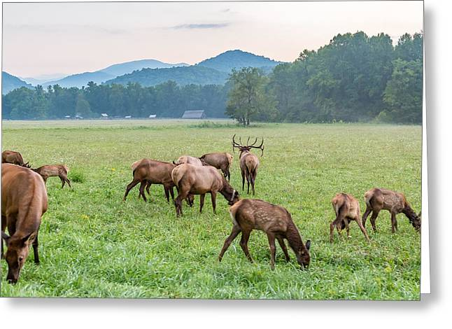 Mccoy Greeting Cards - Elk Greeting Card by A Different Brian Photography
