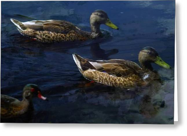 Tern Greeting Cards - Exotic Birds of America Ducks in a pond Greeting Card by Navin Joshi