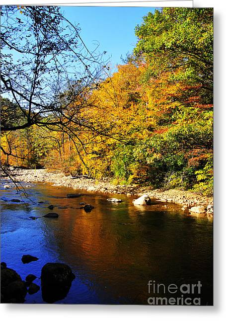 Williams River Greeting Cards - Fall Color Williams River Greeting Card by Thomas R Fletcher