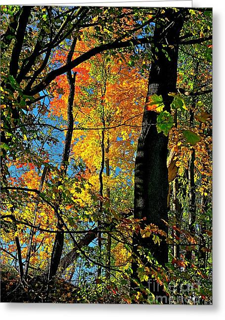 Fall Fire Works Greeting Card by Robert Pearson
