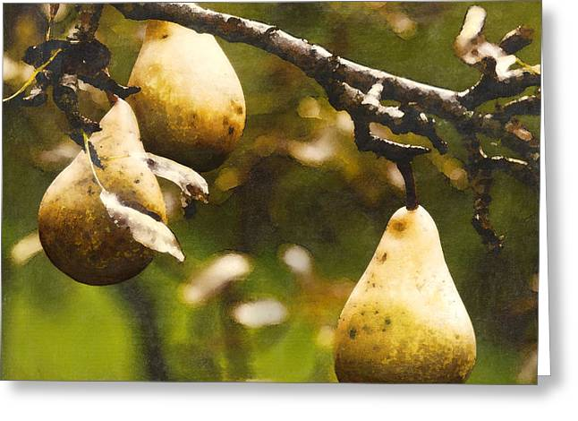 Pears Greeting Cards - Fall Harvest Greeting Card by Barb Pearson