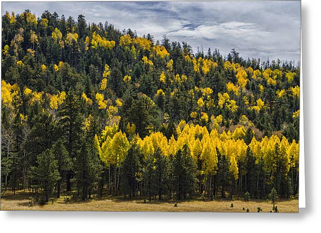San Francisco Peaks Greeting Cards - Fall on the Mountain Greeting Card by Saija  Lehtonen
