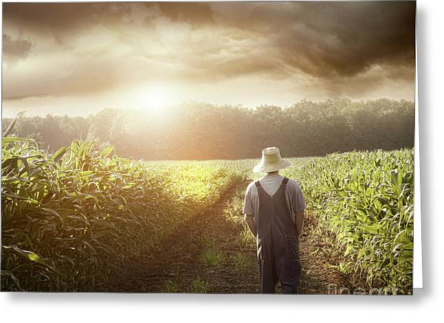 Summer Storm Greeting Cards - Farmer walking in corn fields at sunset Greeting Card by Sandra Cunningham