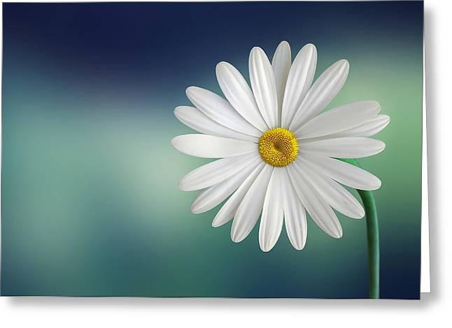 Flower Greeting Card by Bess Hamiti