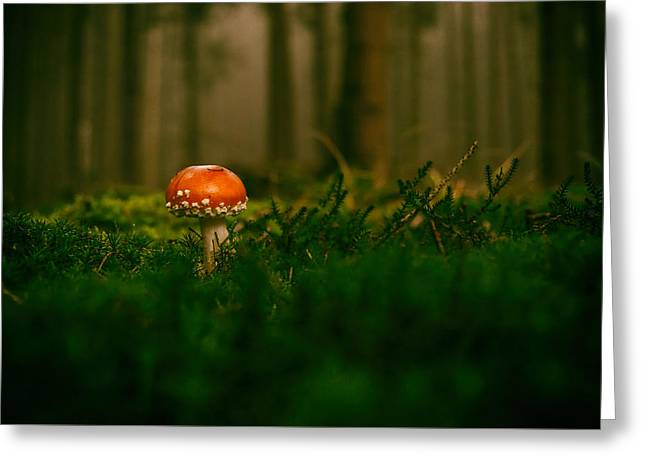 Forest Mushroom Greeting Card by Mountain Dreams