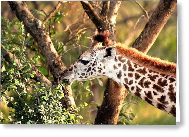 Giraffe Greeting Card by Sebastian Musial