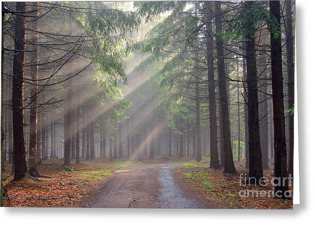 God beams - coniferous forest in fog Greeting Card by Michal Boubin