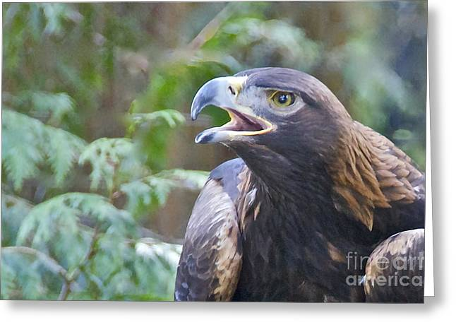 Sean Griffin Greeting Cards - Golden Eagle Greeting Card by Sean Griffin