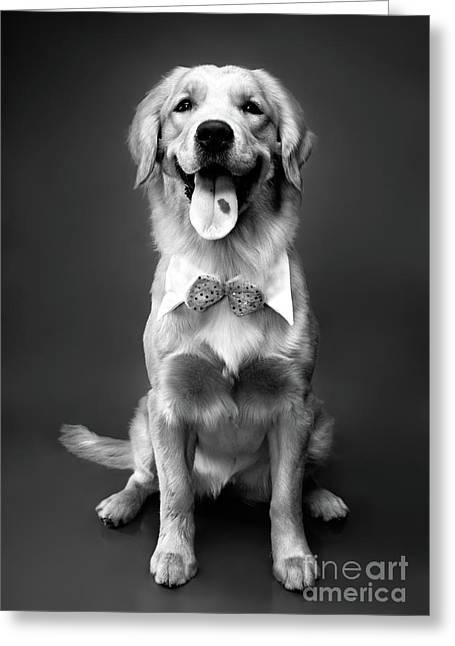 Old Labrador Greeting Cards - Golden Retriever Greeting Card by Oleksiy Maksymenko