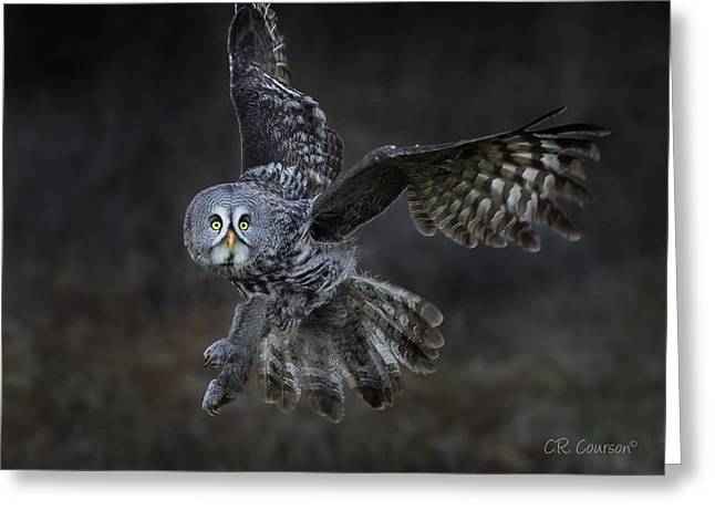 Great Gray Owl Greeting Card by CR Courson