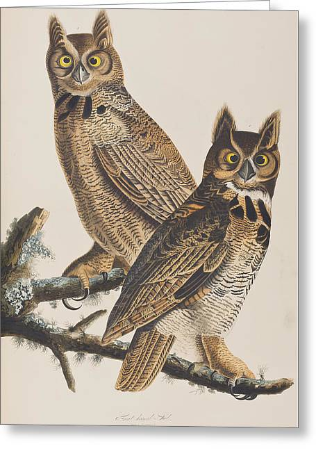 Great Horned Owl Greeting Cards - Great Horned Owl Greeting Card by John James Audubon