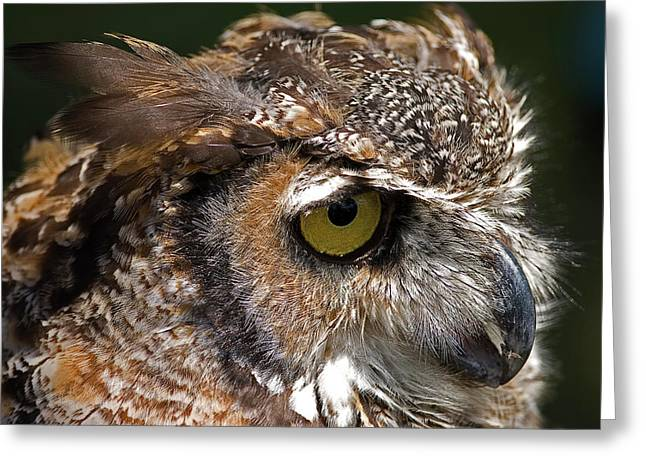 Skyhunter Greeting Cards - Great Horned Owl Greeting Card by JT Lewis