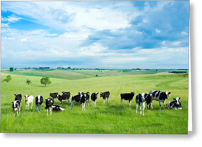 Monticello Greeting Cards - Happy Cows Greeting Card by Todd Klassy