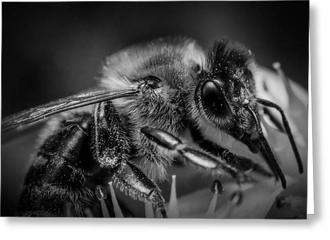 Nature Study Greeting Cards - Honeybee Macro Greeting Card by RealAKP